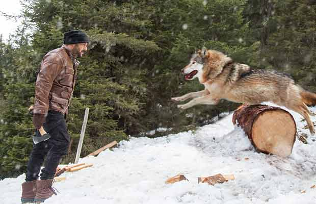 Salman Khan Shoots The Most Dangerous Action Sequence With Wild Wolves For Tiger Zinda Hai